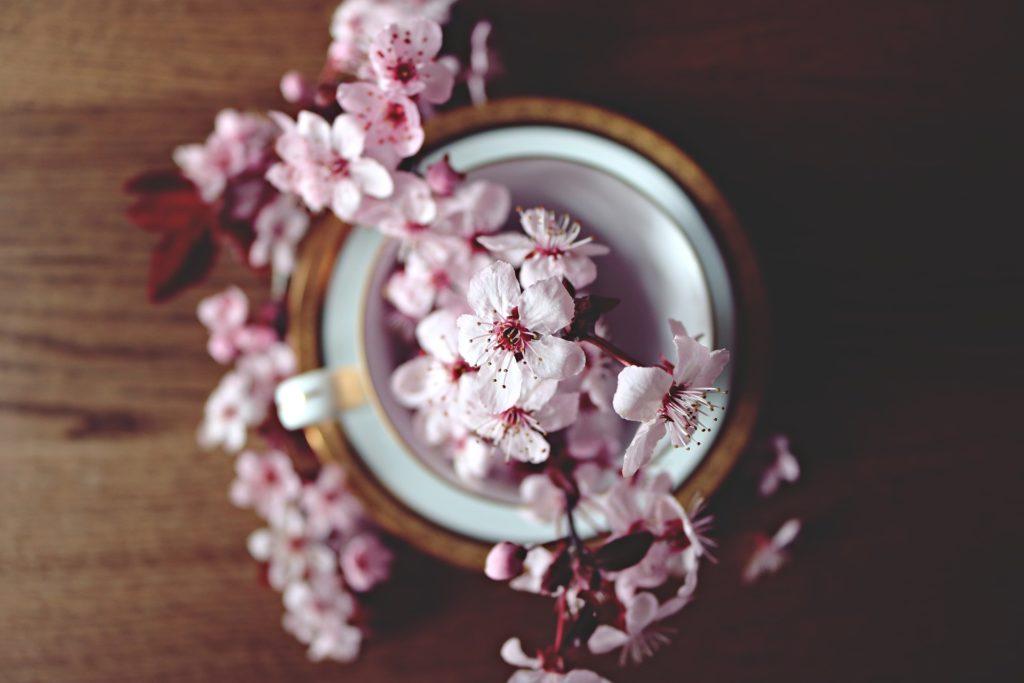 Infusion et fleur de cerisier